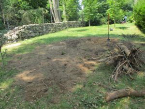 This area will be seeded and perhaps planted with another linden tree.