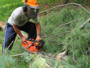 Elsewhere on the property, many other fallen trees and branches were being cleared.