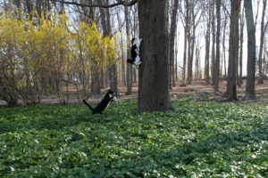 Betsy's rescued cats, Blaze and Tipper, enjoy frolicking outdoors.