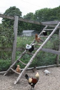 They also like climbing and perching on the ladders.