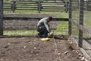 Meanwhile, Wilmer has been busy marking out the vegetable garden.