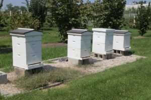 The bee hives are very active and healthy.