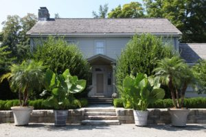The entrance to the Summer House flanked by potted Phoenix roebelenii Pygmy Date Palms and giant alocasias