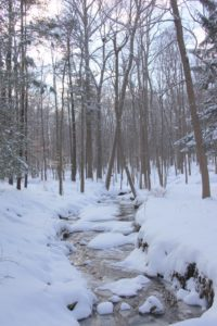 One of the gurgling streams through the woods