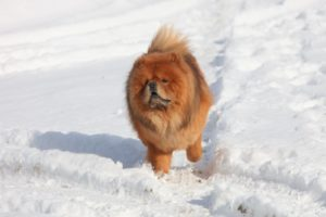G.K. wanted to get out and run.  He is quite fast.  He has a wonderful sense of humor and really loves playing games.