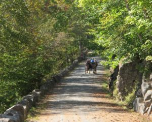 You can see why these tranquil carriage roads are so popular for those visiting Acadia National Park.