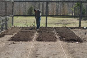 Wilmer has been measuring and marking the beds and top-dressing them with rich compost.