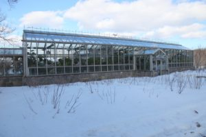 This is the front side of my greenhouse.  On either side of the entrance are my currant bushes - red, white, and black.  You can see their long canes poking through the snow.