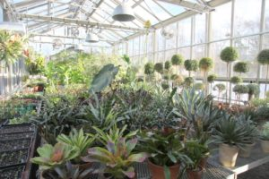 This is one half of the greenhouse where we keep plants that require minimal watering.