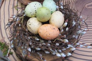 These lovely speckled eggs are resting in a pussy willow nest.
