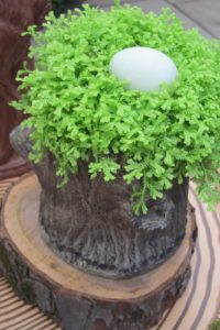 And this egg is upon selaginella greenery.