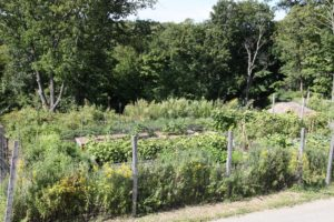 And toured a very well-grown vegetable garden