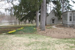 There is much spring growth in the shade garden near the Tenant House.