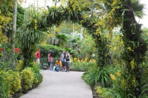After the ride, we entered the National Orchid Garden where the TV crew was waiting.