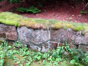 The side walls of the carriage roads have lichen, moss, and ferns and are beautiful objects themselves.