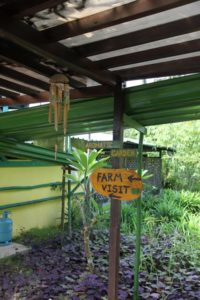 The farm is a quaint and colorful place with hand-painted signs posted throughout.