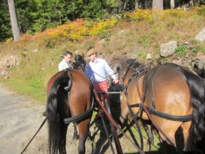 Brian Lindquist, who works for David Rockefeller is enormously knowledgeable about the Rockefeller family history in the Acadia region -  and Patrick, son of Sem Groenewoud, steadies the horses - Patrick is a superb horseman.
