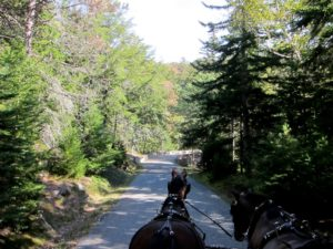 These rustic carriage roads were a gift of David's father, philanthropist John D. Rockefeller Jr. and the Rockefeller family.
