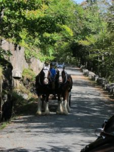 These carriage roads are approximately 16-feet wide, allowing ample room when meeting another horse-drawn carriage.