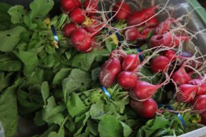 Spicy radishes