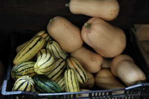 Delicata and butternut squash