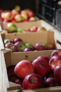 A variety of apples including Paula red, red delicious, macoun, and gala