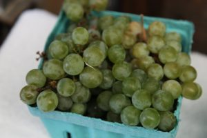 Even white concord grapes!
