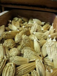 These are dried cumin flowers which, when pulled apart, are used as natural toothpicks.
