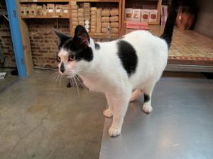 Myrrh, the shop cat, is extremely friendly.
