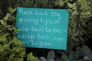 Throughout the herb garden are helpful tips.