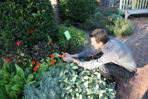 The bright flowers of nasturtium are edible.