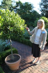 Jean Graham - Director of Community Relations for MSLO is admiring a fragrant standard bay tree.