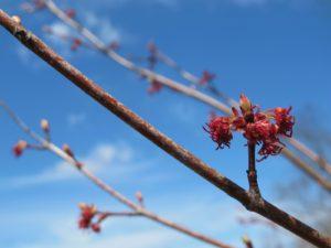 A closeup of those buds