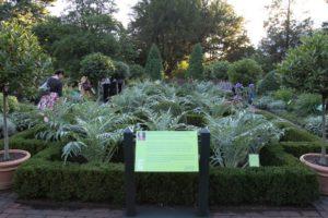 An overview of The Martha Stewart Culinary Herb Garden