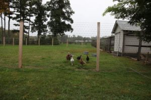 Mike asked about feeding the grass in the turkey pen.