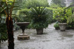 The tropical garden in front of the house, had potted plants that were too heavy to move.   They were sitting in a river of water flowing down the drive.