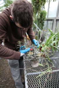 Shaun likes to wear safety glasses when working with spiny plants.