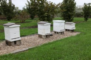 Activity at the beehives has slowed down with colder temperatures.
