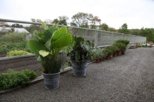 These giant plants will soon be placed indoors.