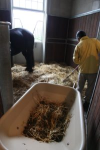 Every two days, the horse's stalls are mucked and thoroughly cleaned.