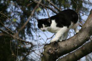 Tipper is quite an agile climber.