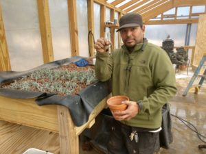 Here is Kevin next to one of his baby lavender trays in the aquaponics greenhouse. He is getting ready to move them into the dirt.