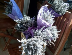 This is one of Soleado Farm's greatest sellers: cut and dried lavender. I gave Jude, Martha's granddaughter, a small cutting from Kevin and Sophia - she loved the smell of these dried flowers.