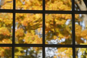 Autumn leaves through the wavy glass panes of the stable doors.
