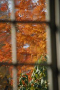 More autumn through wavy glass