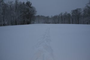 These tracks across the field were actually made by Betsy's snow shoes.