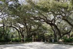 The Garden Mound is crowned with a mantle of gnarled old Live Oak trees, some of which are approaching 200 years old! These trees were dug from other properties as mature trees, brought to Vizcaya, and winched to the top of the mound where they were planted and remain today.