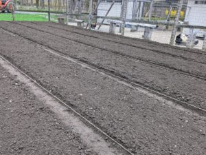 A portion of one side was left as long rows for the tomatoes. The deep, organically rich soil will encourage and support the growth of all the healthy root systems.