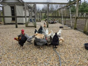 Visitors love going down to see all the breeds and the different colored eggs they produce.