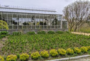 And remember my new formal garden beds in front of my main greenhouse? These beds are just bursting with new spring growth. I can't wait to see all the stunning white lilies that grow here.